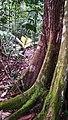 Rain forest 4.jpg