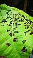 Rain forest 8.jpg