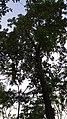 Rare tree at .jpg
