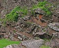 Red sandstone base of Goodrich Castle - geograph.org.uk - 473034.jpg