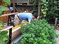 Redwood bench in Cottage Garden Berkeley 14.jpg