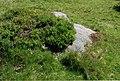 Reinischkogel überwachsener Felsblock.jpg