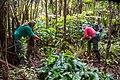 Restoring native rainforest - Stewardship at the Summit.jpg