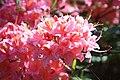 Rhododendronpark Bremen 20090513 051.JPG
