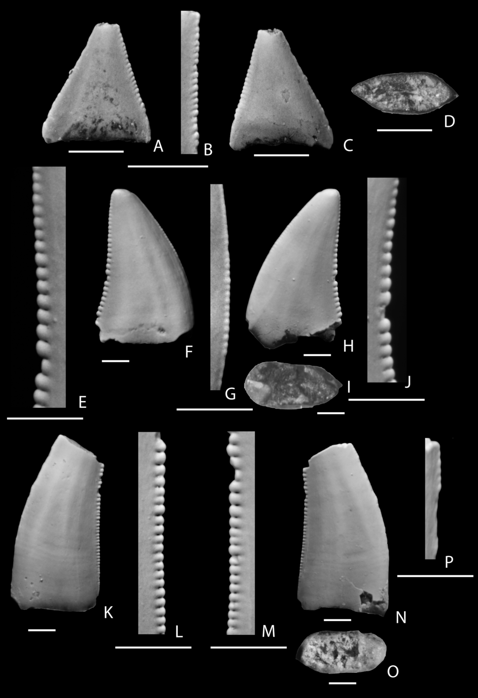 Richardoestesia teeth