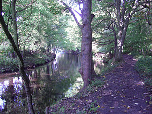 Beeley Wood - The River Don flowing through Beeley Wood.