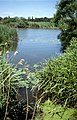 River Waveney - geograph.org.uk - 1368313.jpg