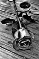 Rose on Wood.JPG