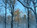 Ruissalo winter forest 2.jpg
