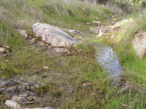 Surface runoff - Surface runoff from a hillside after soil is saturated