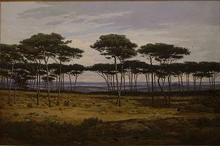 Les pins de Plédéliac