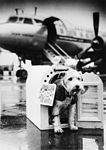 SAS Cargo (2).jpg