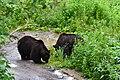 Sahoro Resort Bear Mountain サホロリゾート ベアマウンテン10.jpg