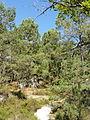 Saint-Pierre-lès-Nemours (77), le Mont Sarrasin par le GR 13, sens est-ouest 11.JPG