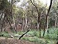 Salinas, CA, USA - panoramio (47).jpg
