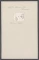 Salpa bicornis - - Print - Iconographia Zoologica - Special Collections University of Amsterdam - UBAINV0274 092 08 0032.tif