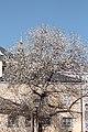 Salzburg - Altstadt - Bruderhof Loretkloster - 2019 03 24 - 3.jpg