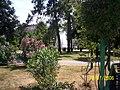 Samsun - panoramio.jpg