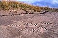 Sand Hands - panoramio.jpg