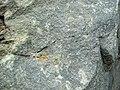Sandorite lamprophyre (Sandor Dike, Neoarchean, 2.703 Ga; Route 17 roadcut northeast of Wasp Lake & north of Wawa, Ontario, Canada) 5 (48341267266).jpg
