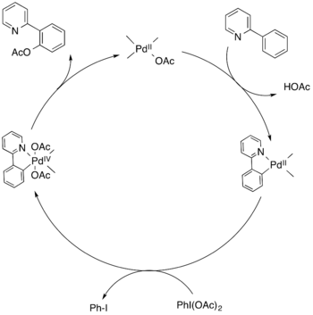 Pd-catalyzed mechanism for C-H activation