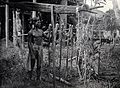 Sarawak; a tribesman placing offerings to the omen-birds on Wellcome V0037466.jpg