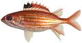 Sargocentron coruscum - pone.0010676.g039.png