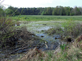 Schnepfenried nature reserve, Cottbus (small marsh).png