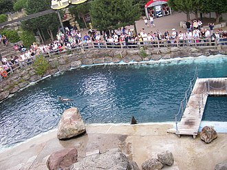 Safari Skyway - Image: Sea Lions at Chessington World of Adventures