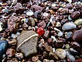 Seaglass Bead at Fairy Cove, Paignton.jpg