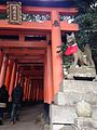 Sembon-Torii in Fushimi Inari Grand Shrine 5.jpg
