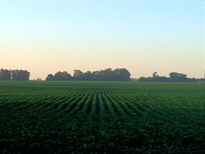 English: Soybean field in the Proivince of Bue...