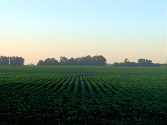 Soybean - Soya Fields in Argentina