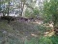 Senkai piliakalnis 20090904.JPG