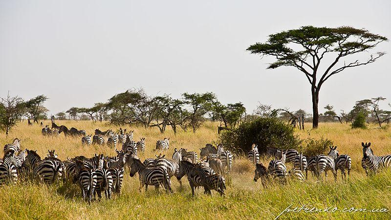File:Serengeti, Tanzania - panoramio (25).jpg