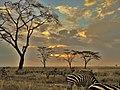 Serengeti 33 (14513984628).jpg