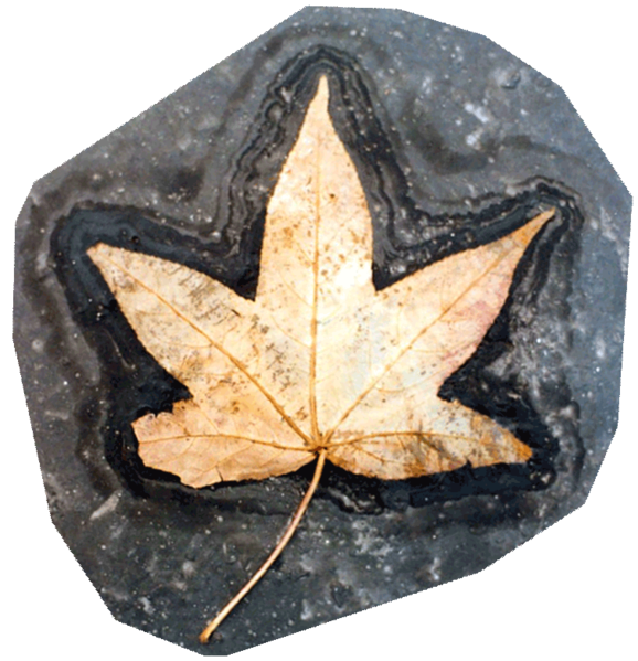 File:Shiny star leaf fringed weirdly in tarry moongate.png