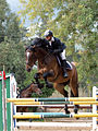 Show Jumping Competition.JPG