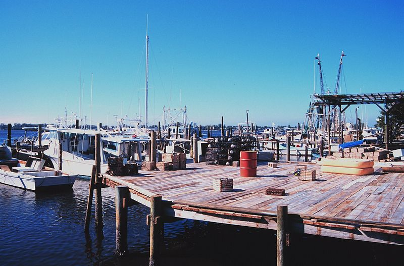 File:Shrimp, snapper, grouper, and stone crab fishing boats at Cortez, Florida.jpg