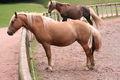 Silz cheval1.jpg