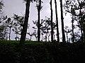 Sitargundu Estate, Kollengode South, Kerala 678508, India - panoramio (3).jpg