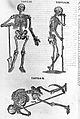 Skeleton illustration, 17th century Wellcome L0001417.jpg