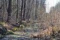 Skulyn Kovelskyi Volynska-Lisova khashcha nature monument-view near road-2.jpg