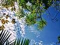 Sky forest.jpg