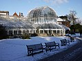 Snow at the Palm House, Botanic Gardens - geograph.org.uk - 1659840.jpg