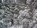 Snowshoeing in Algonquin Provincial Park 2.JPG