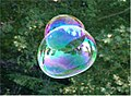 Soap Bubble - foliage background - iridescent colours - Traquair 040801.jpg