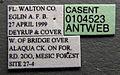Solenopsis invicta casent0104523 label 1.jpg