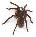 Spider20.jpg