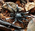 Spider wynaad 2.jpg